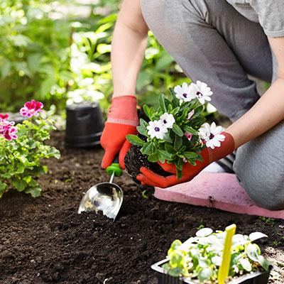 Outils de jardinage à main